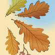 Autumn oak leaves — Stock Vector