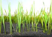 Grass groene achtergrond — Stockfoto