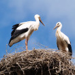 Royalty-Free Stock Photo: Storks