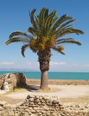 棕榈 — 图库照片