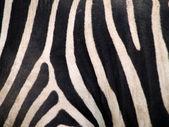 Pelle di zebra — Foto Stock