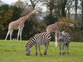 Safari park — Stock Photo