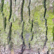 Photo: Green spruce bark
