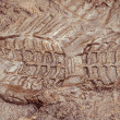 Boot print in brown mud - Stock Photo