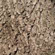 Oak bark — Stock Photo #1144208