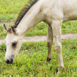 White horse against green grass — Stock Photo #1144545