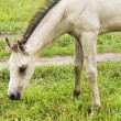 Stock Photo: White horse against green grass