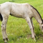 White horse against green grass — Stock Photo #1144564