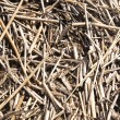 Cane background — Stock Photo #1144623