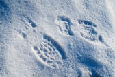 Two footprints in snow — Stock Photo