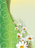 Greeting card with daisies — Stock Vector