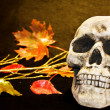 Scary Halloween skull — Stock Photo