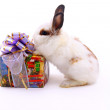 Gift and hare — Stock Photo