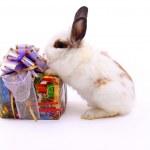 Постер, плакат: Gift and hare