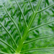Green leaf close up — Stock Photo