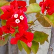 Stock Photo: Red flower branch