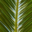 Palm leaf — Stock Photo #1151059