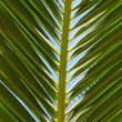 Palm leaf - Stock Photo