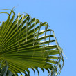 Stock Photo: Palmtree leaves isolated on blue