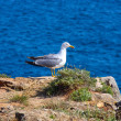 Royalty-Free Stock Photo: A proud seagull sitting in the sun