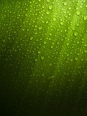 Green Leaf with Dew Drops — Stockfoto