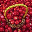 Basket Full of Cowberries - Stock Photo