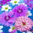 Floating Summer Flowers - Stock Photo