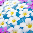 Floating Summer Flowers — Stock Photo #1155785