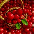 Stock Photo: Basket Full of Cowberries