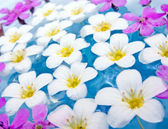 Floating Summer Flowers — Stock Photo