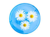 Floating Spa Flowers — Stock Photo