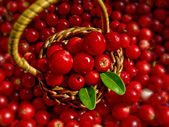 Basket Full of Cowberries — Stock Photo