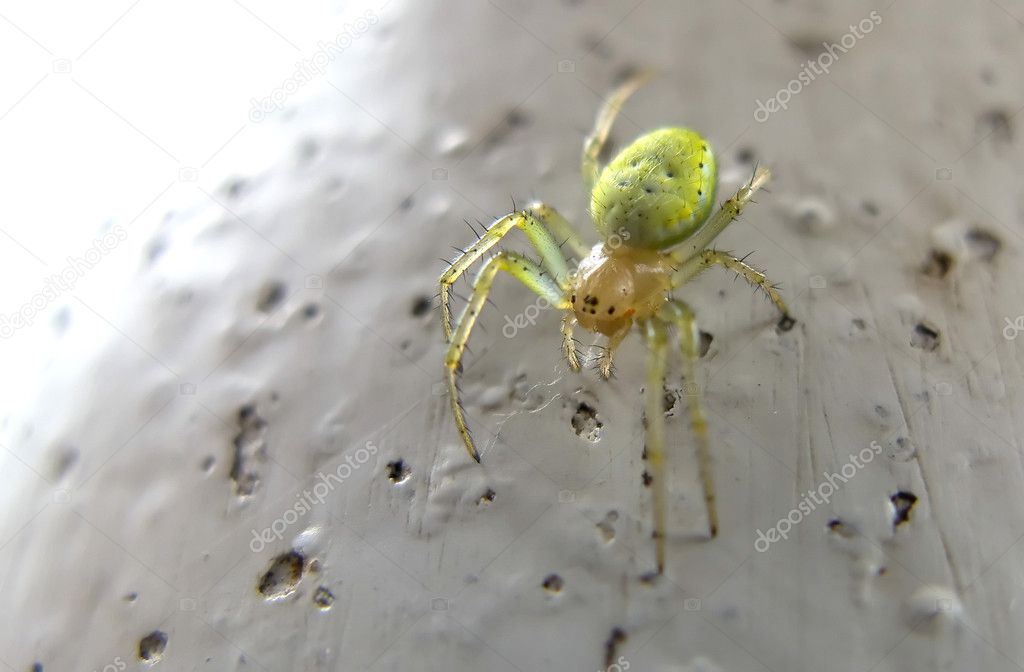 Close-up of a Six-Eyed Green Spider — Stock Photo #1158117