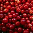 Stock Photo: Cowberries
