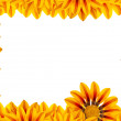 Golden Flower Frame — Stock Photo