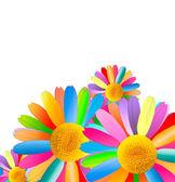 Colorful Chamomiles — Stock Photo