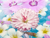 Summer Flowers on the Water — Stock Photo