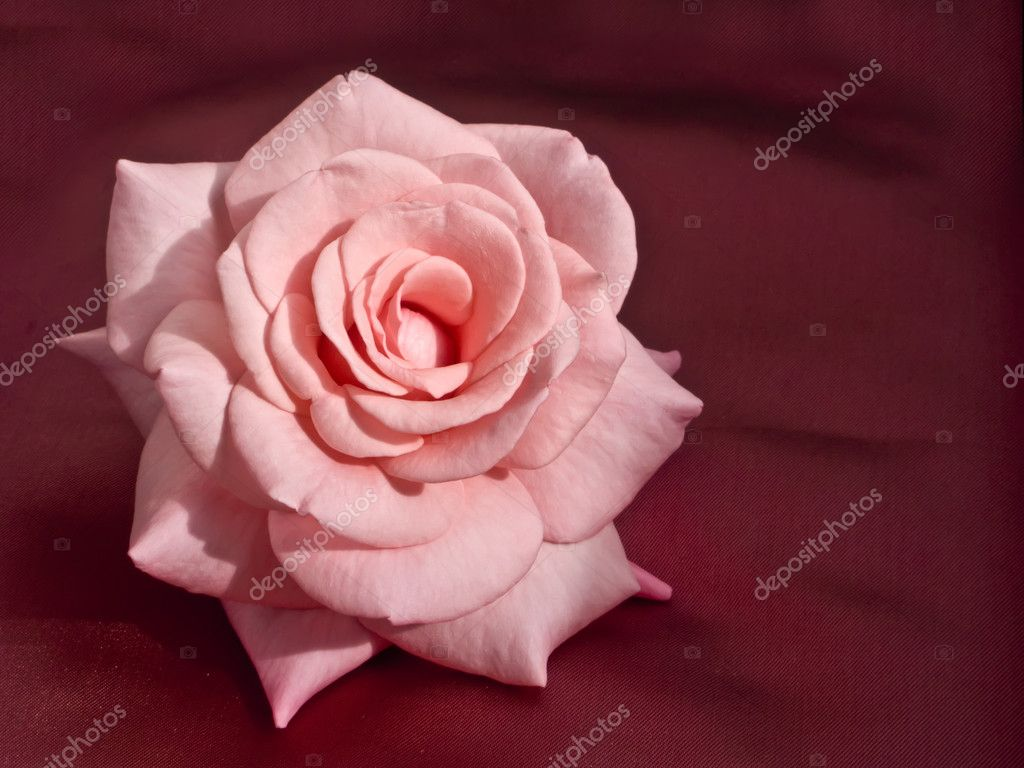 Pink Rose on Silk — Stock Photo #1165965