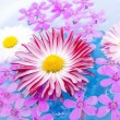Stock Photo: Floating Summer Flowers