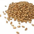 Wheat Grains - Stock Photo