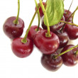 Juicy Cherries — Stock Photo