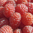 Stock Photo: Juicy Raspberries