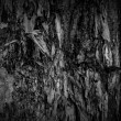 Dark Wood Texture — Stock Photo #1551606