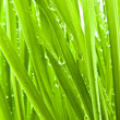 Green Grass on My Lawn — Stock Photo