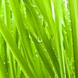 Green Grass on My Lawn - Stock Photo