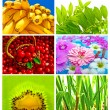 Beautiful and Healthy Mix — Stock Photo #1566856