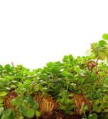 Indoor Plant Bakcground — Stock Photo