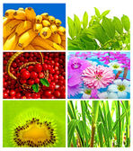 Mistura linda e saudável — Foto Stock