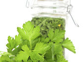 Fresh and Dried Cilantro (Coriander) — Stock Photo