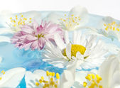 Delicate Summer Flowers — Stock Photo